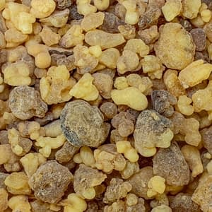 Frankincense Boswellia Carterii | The Apothecary Egypt
