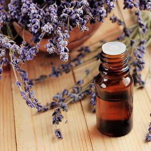 Lavender Essential Oil Egypt