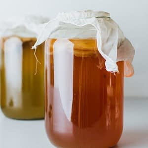 Kombucha Tea and Scoby Egypt | The Apothecary Egypt