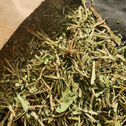 Wild Dandelion Leaf Egypt