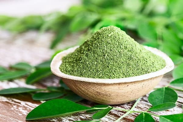 Moringa Leaves Egypt