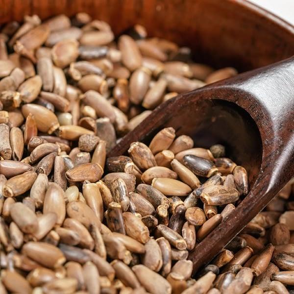 Milk Thistle Seeds | The Apothecary Egypt