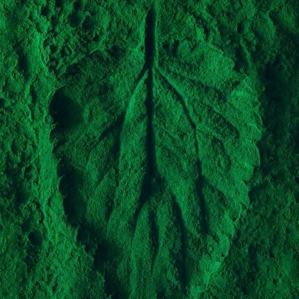 Nettle Leaf Tea Powder Egypt